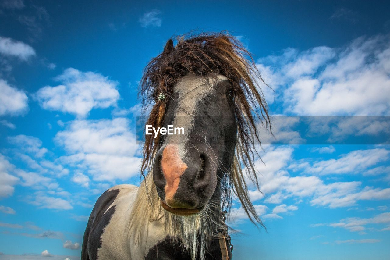 Low Angle View Of Horse Head