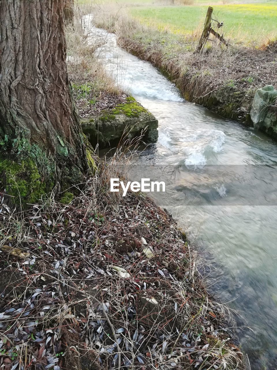 plant, water, nature, land, tree, beauty in nature, tranquility, no people, day, forest, flowing water, scenics - nature, river, growth, grass, flowing, tranquil scene, outdoors, stream - flowing water