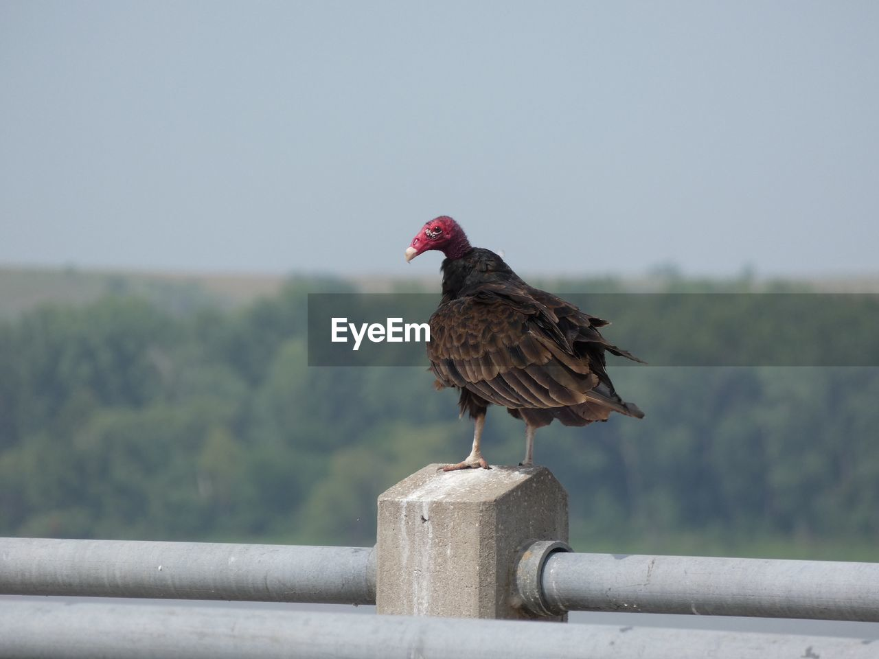 bird, vertebrate, perching, animal themes, animal, focus on foreground, one animal, animals in the wild, day, sky, wood - material, animal wildlife, nature, no people, railing, post, clear sky, full length, wooden post, outdoors