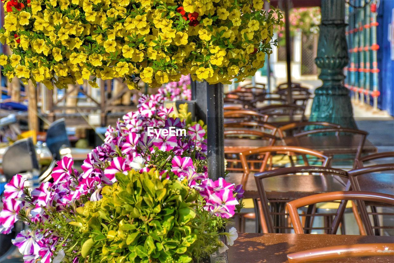 flower, flowering plant, plant, freshness, nature, fragility, vulnerability, growth, day, no people, focus on foreground, beauty in nature, table, seat, outdoors, architecture, chair, close-up, purple, business, flower head, flower pot