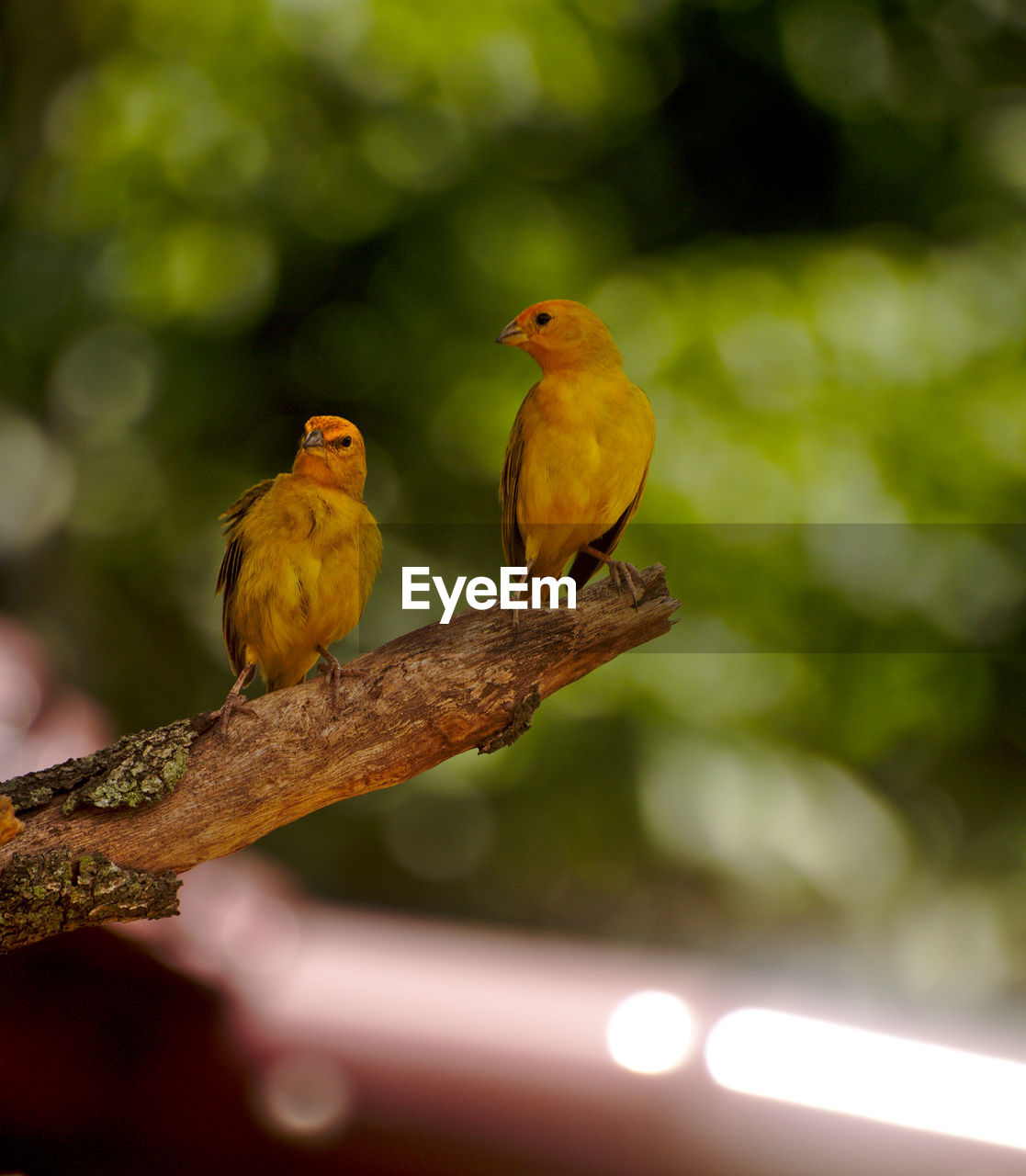 bird, vertebrate, perching, animal themes, group of animals, animal, branch, animal wildlife, two animals, tree, animals in the wild, focus on foreground, day, nature, outdoors, plant, no people, close-up, selective focus, beauty in nature