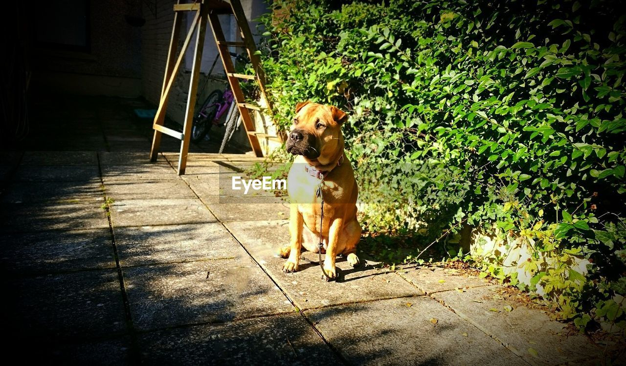 dog, pets, one animal, domestic animals, animal themes, mammal, outdoors, sunlight, day, no people, full length, sitting, nature