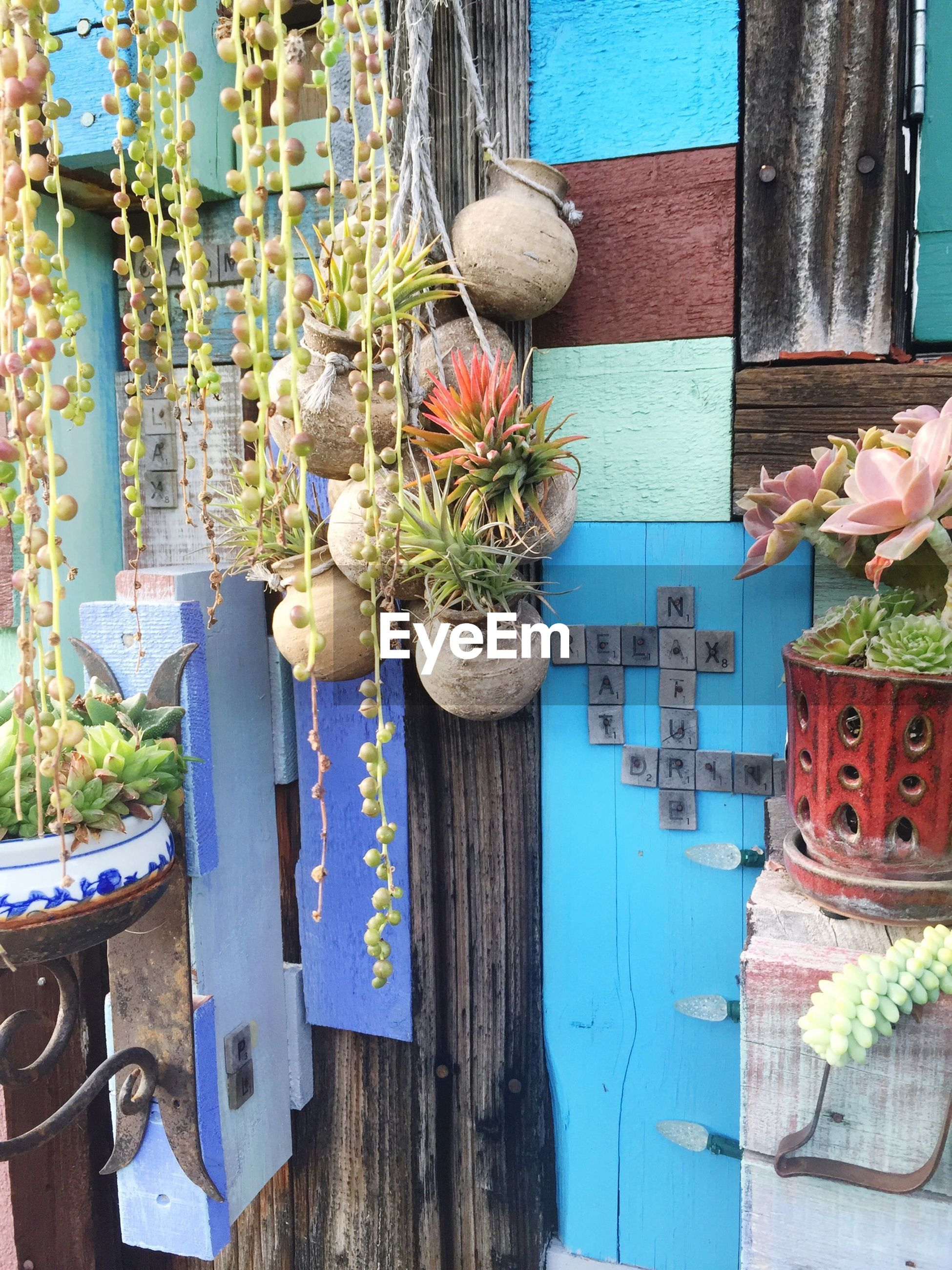 building exterior, built structure, architecture, potted plant, blue, plant, house, growth, day, flower, wall - building feature, outdoors, wood - material, front or back yard, flower pot, old, wall, no people, sunlight, tree