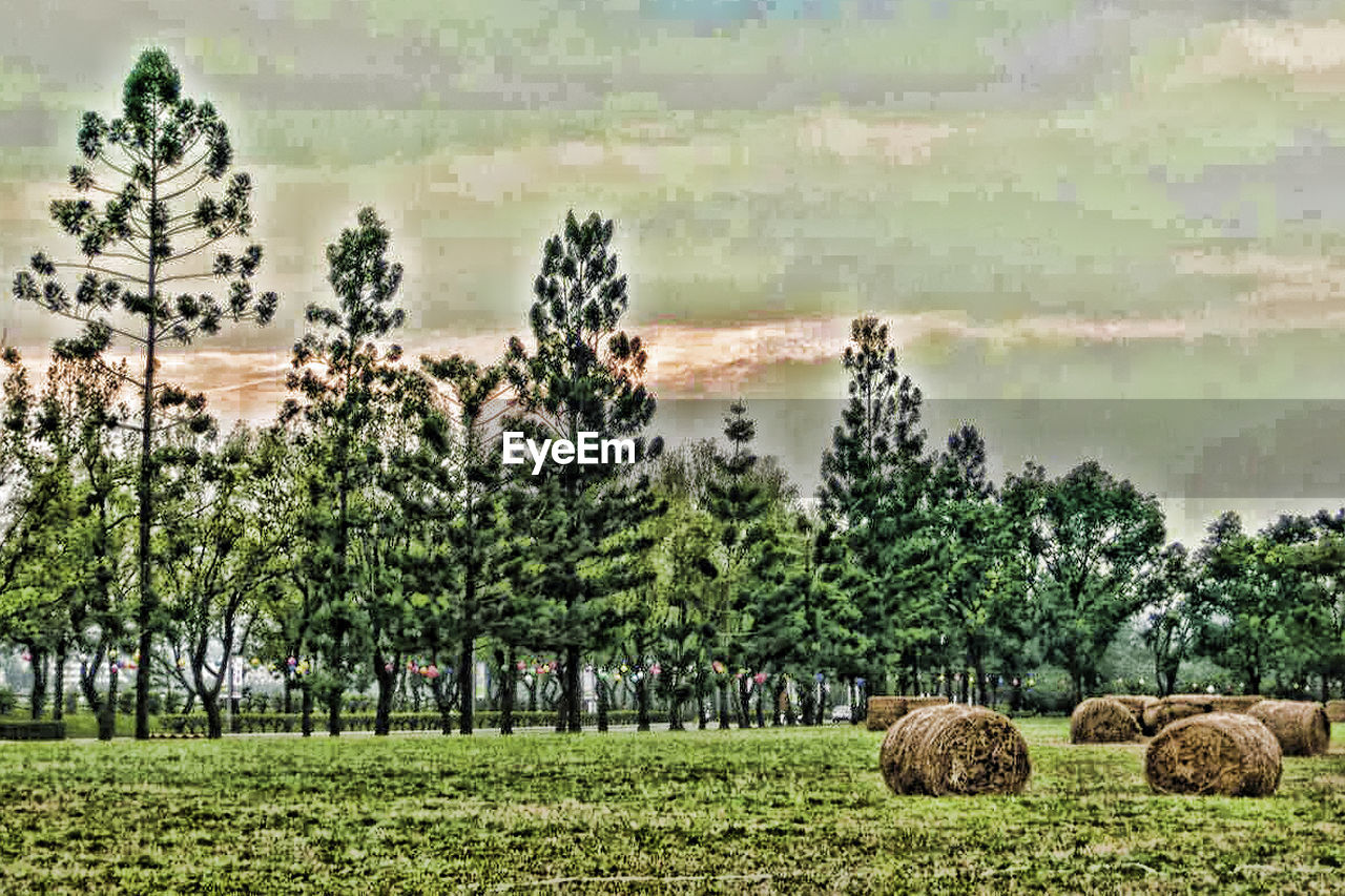 agriculture, tree, farm, rural scene, field, bale, no people, nature, landscape, growth, grass, outdoors, day, scenics, animal themes, sky