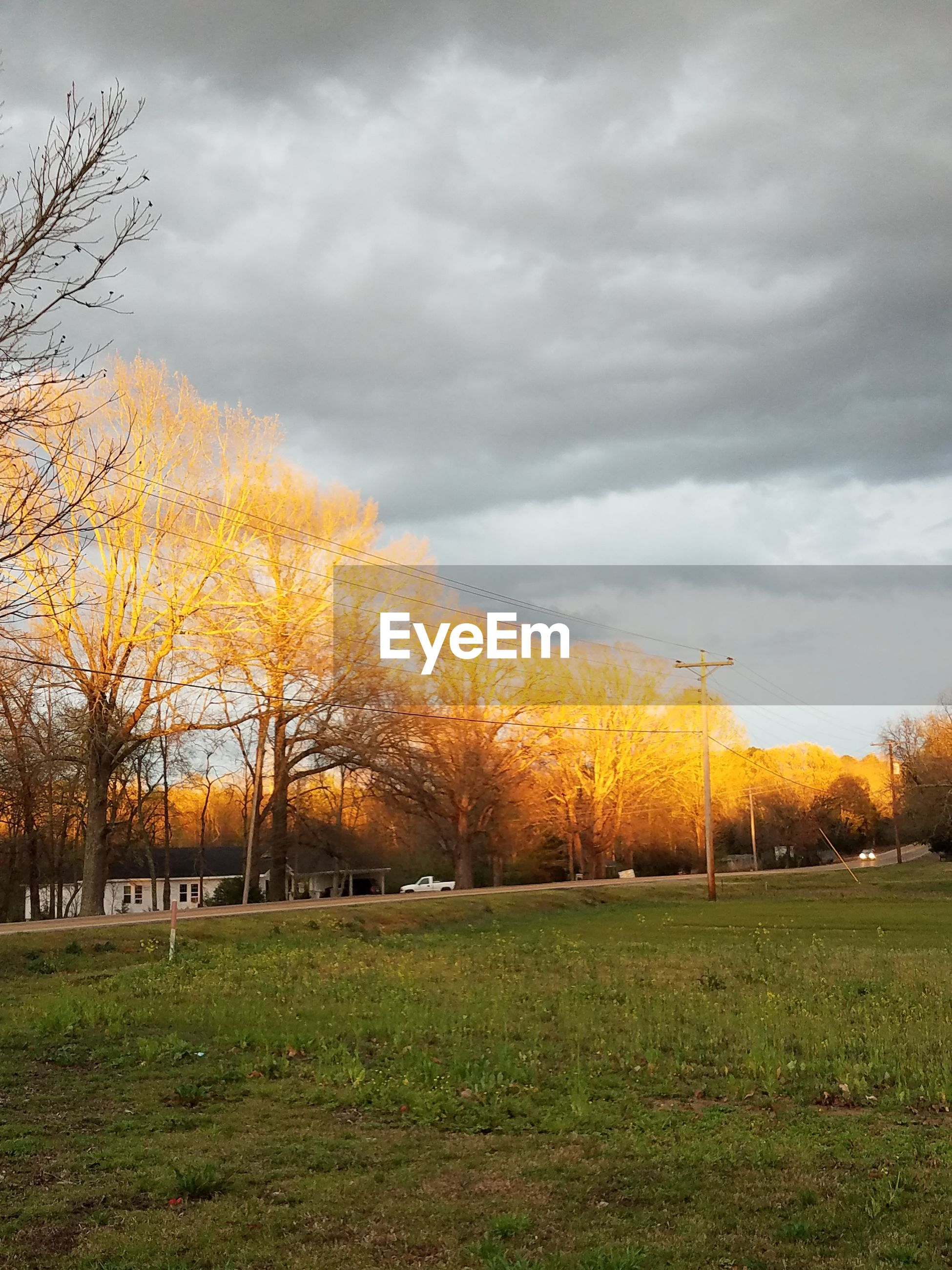 tree, cloud - sky, sky, nature, beauty in nature, no people, grass, sunset, outdoors, scenics, soccer field, day