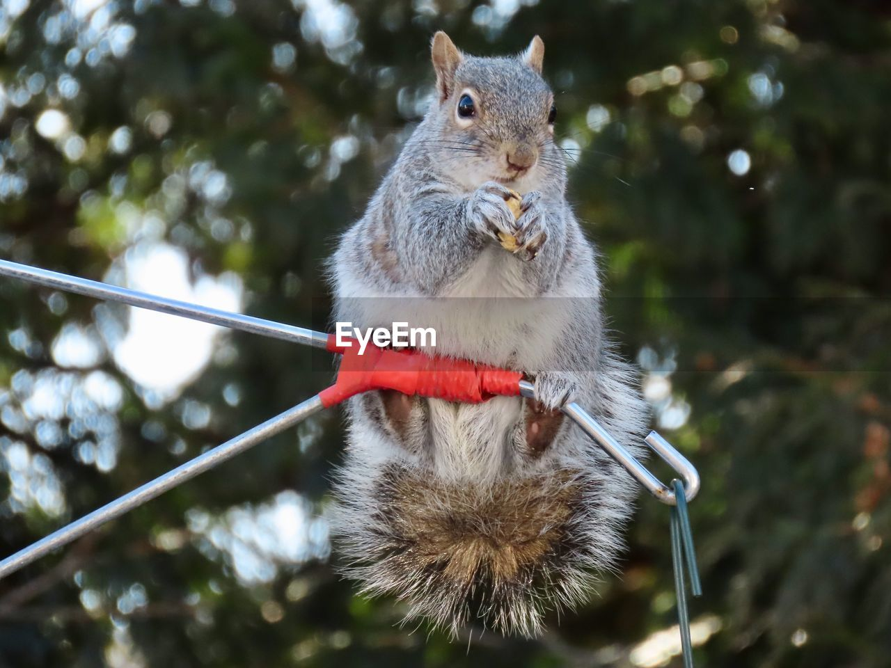 animal themes, animal, mammal, focus on foreground, one animal, rodent, vertebrate, animal wildlife, no people, animals in the wild, day, tree, nature, close-up, outdoors, eating, plant, squirrel, holding, low angle view, whisker