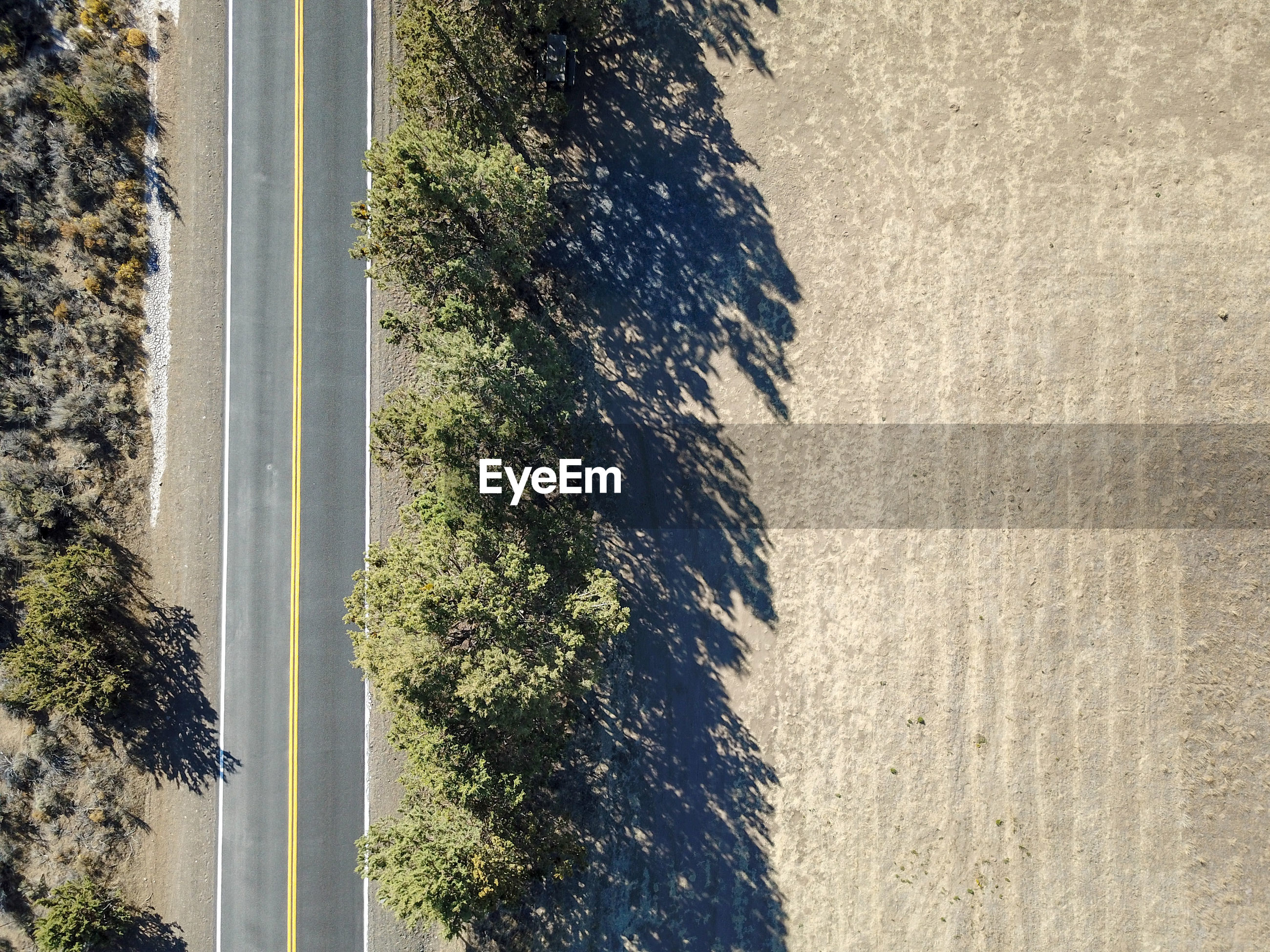High angle view of road by trees in forest