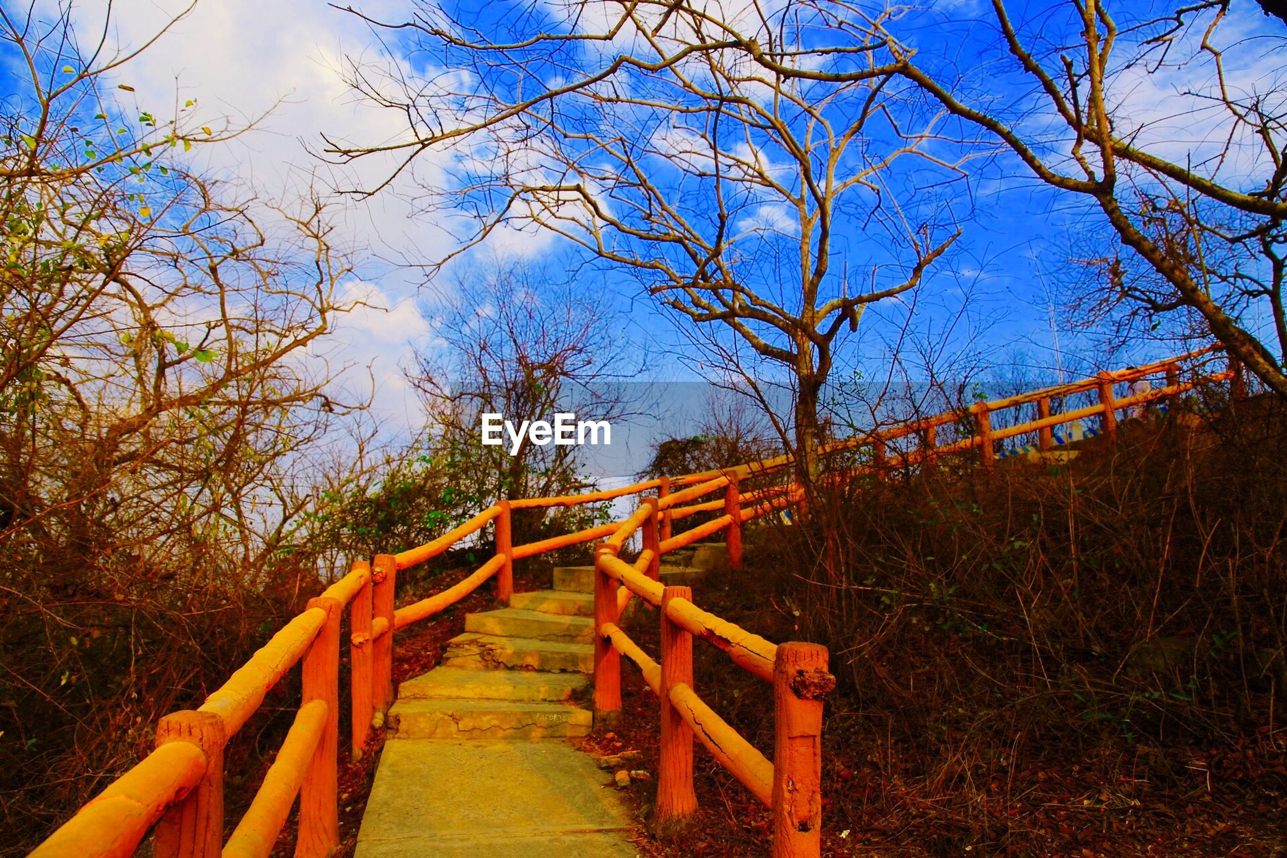 Empty steps by bare trees against sky