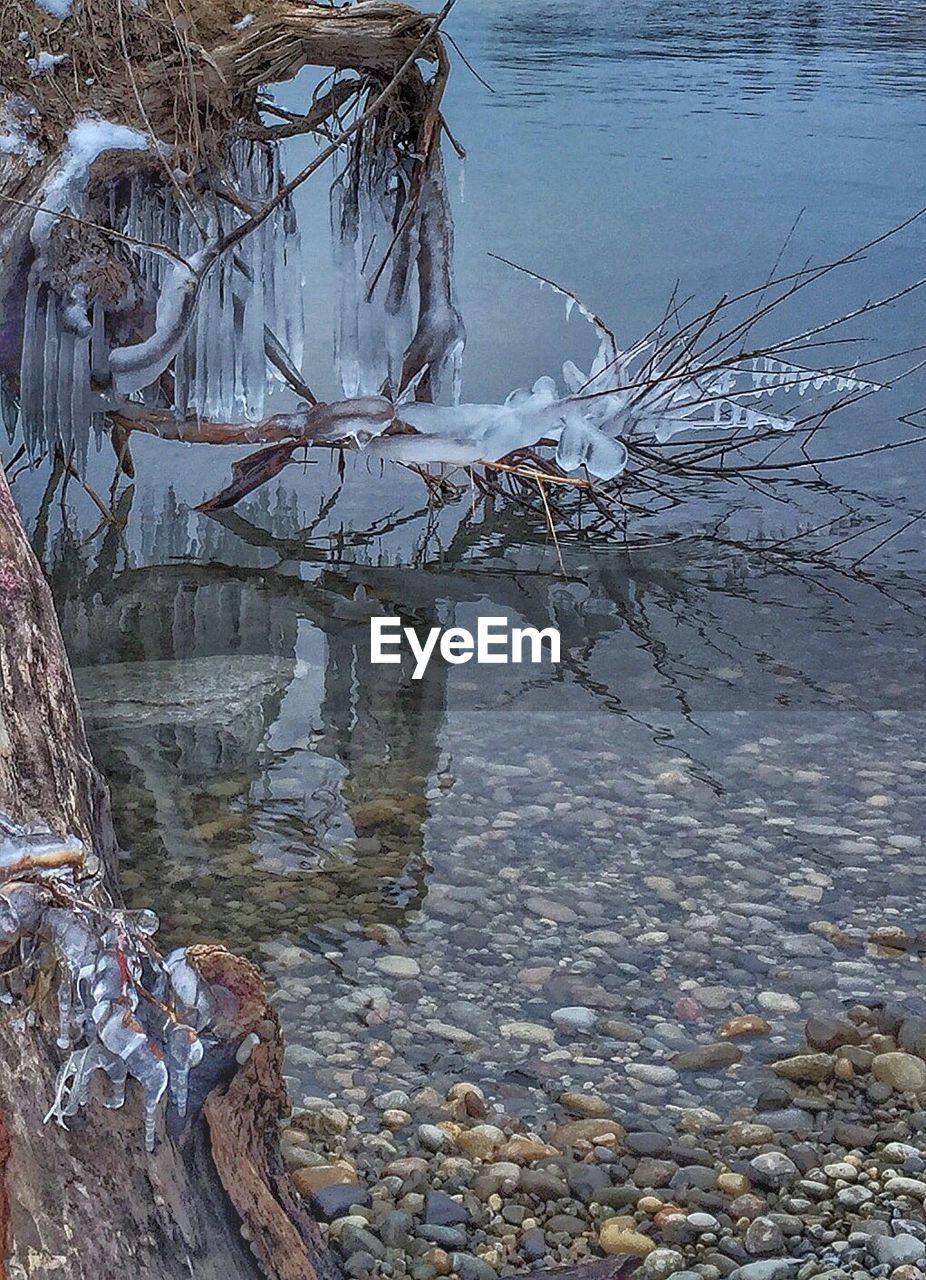 water, nature, no people, day, outdoors, lake, winter, tranquility, beauty in nature, cold temperature, tree, branch, dead tree