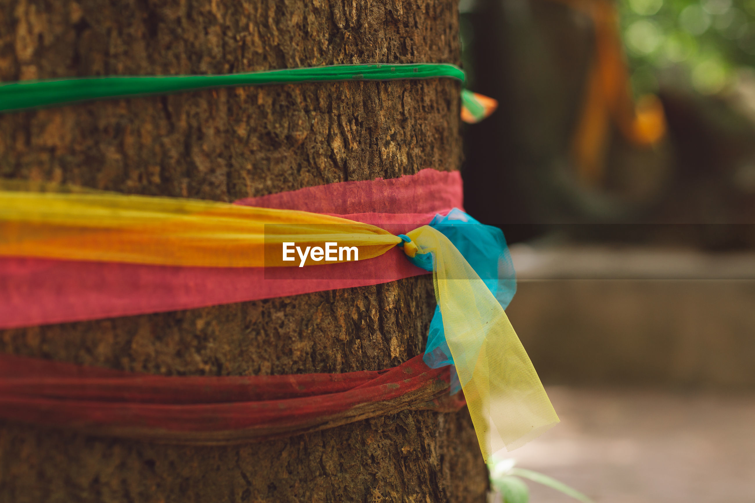 Close-up of colorful ribbons tied up to tree trunk