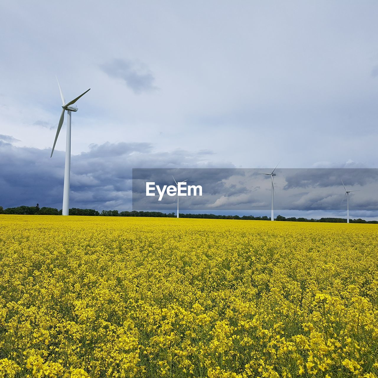 wind power, wind turbine, alternative energy, fuel and power generation, windmill, renewable energy, environmental conservation, yellow, field, rural scene, nature, beauty in nature, industrial windmill, oilseed rape, flower, tranquil scene, sky, tranquility, scenics, day, agriculture, no people, landscape, outdoors, technology, cloud - sky, traditional windmill