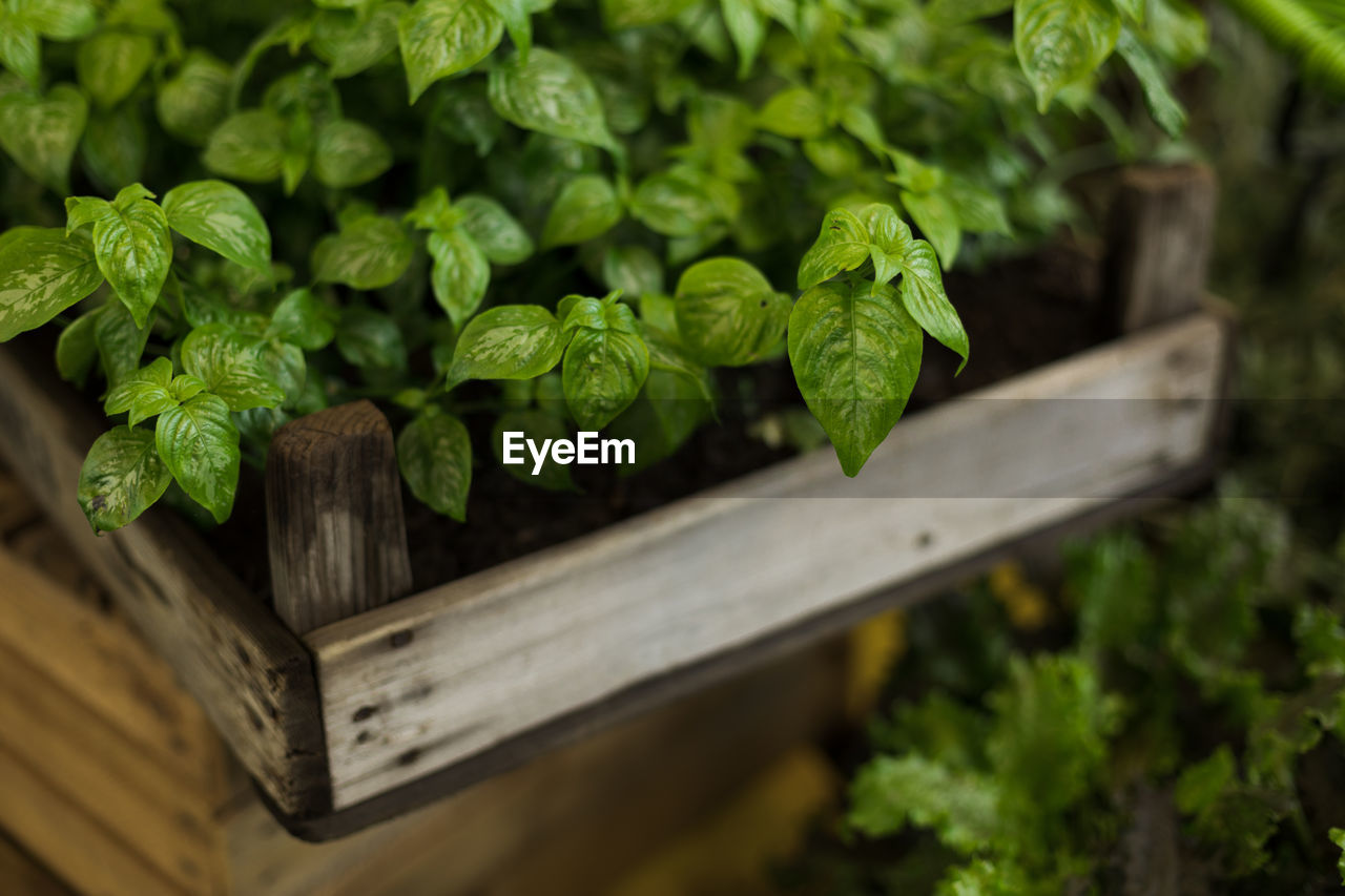 green color, growth, plant, leaf, plant part, selective focus, wood - material, no people, nature, freshness, close-up, food, food and drink, beauty in nature, healthy eating, vegetable, day, wellbeing, outdoors, agriculture