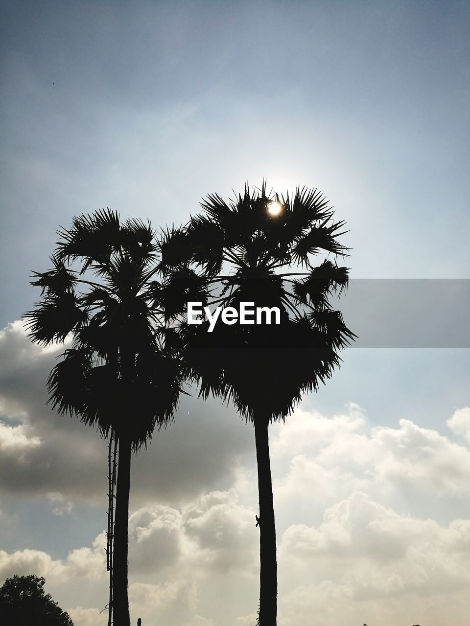 palm tree, low angle view, sky, tree, silhouette, tree trunk, cloud - sky, growth, nature, beauty in nature, outdoors, no people, tranquility, scenics, day, sunset