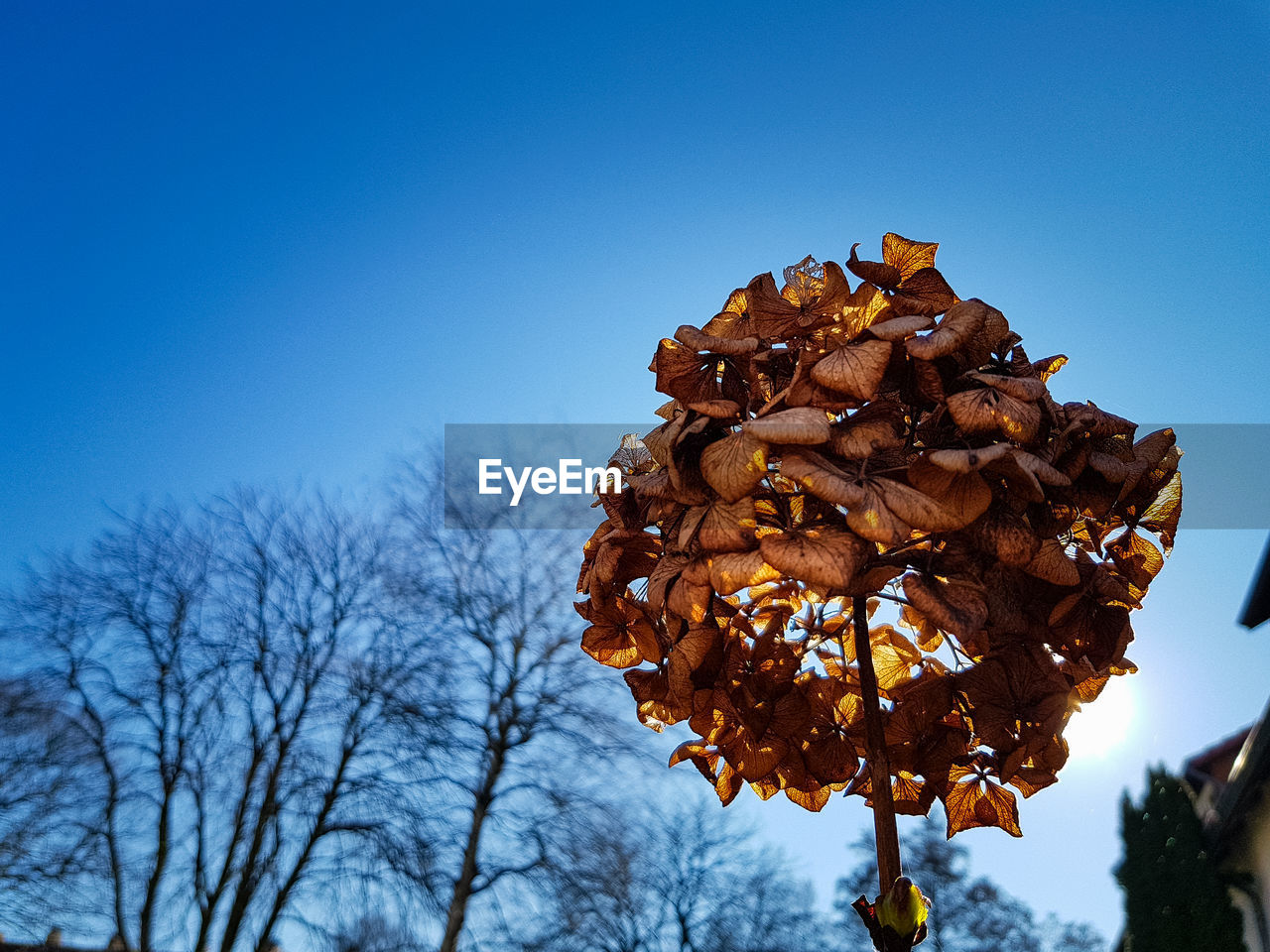 sky, plant, tree, low angle view, nature, clear sky, blue, beauty in nature, no people, focus on foreground, growth, flower, flowering plant, day, freshness, fragility, close-up, copy space, dry, outdoors, flower head, wilted plant, dried
