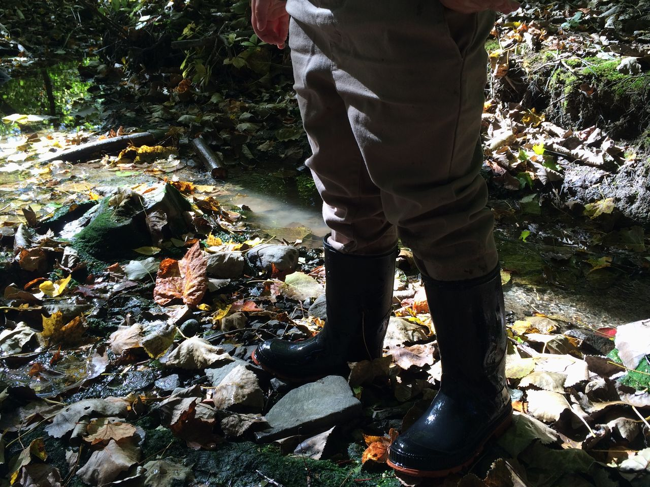 Low section of person standing on leaves at forest