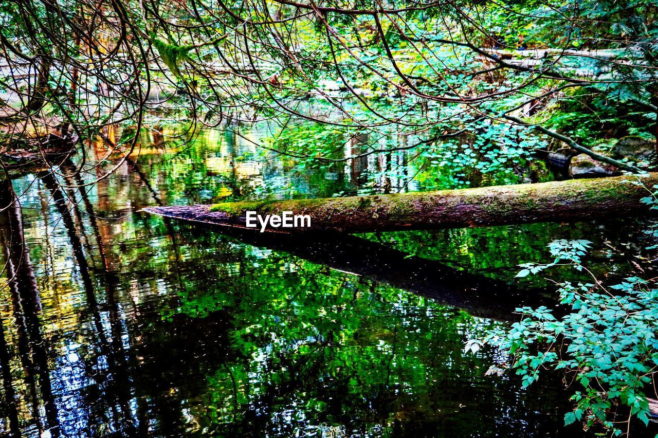tree, plant, forest, growth, branch, tranquility, nature, land, day, beauty in nature, water, no people, outdoors, tree trunk, reflection, woodland, tranquil scene, trunk, scenics - nature