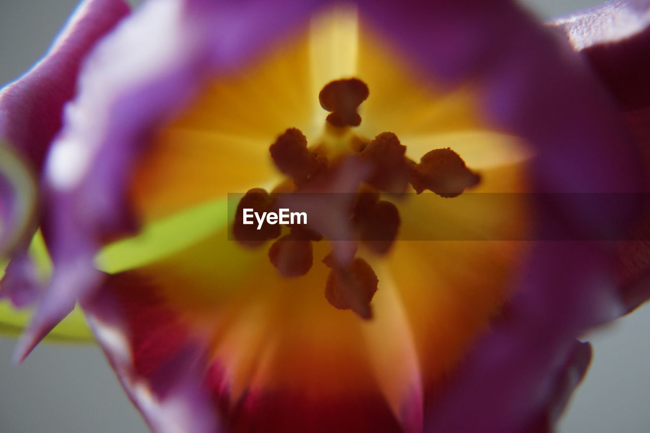flowering plant, flower, petal, beauty in nature, freshness, vulnerability, flower head, close-up, fragility, inflorescence, plant, growth, selective focus, pollen, nature, yellow, no people, extreme close-up, stamen, purple, springtime, soft focus