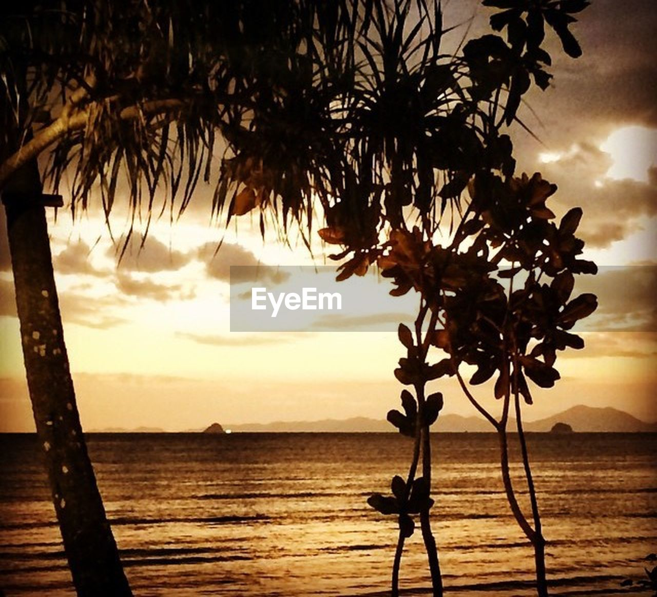 tree, sea, sunset, silhouette, beauty in nature, nature, branch, tree trunk, tranquil scene, scenics, tranquility, sky, water, outdoors, palm tree, no people, beach, horizon over water, growth, day