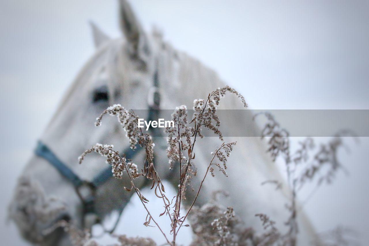 Close-Up Of Frozen Plants Against Horse