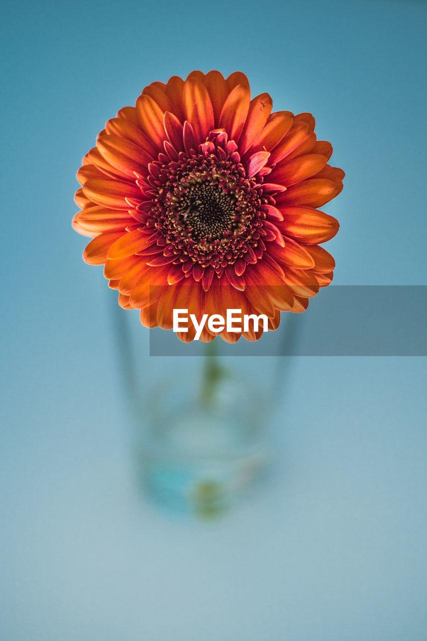 Close-up of orange flower vase over blue background