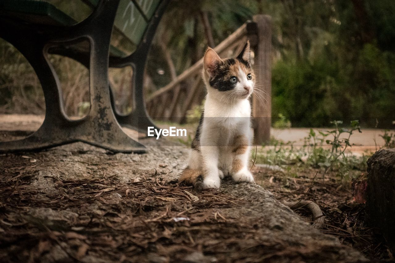mammal, animal themes, animal, one animal, domestic, domestic animals, vertebrate, pets, day, cat, feline, land, no people, selective focus, nature, domestic cat, standing, looking, looking away, tree, outdoors, whisker