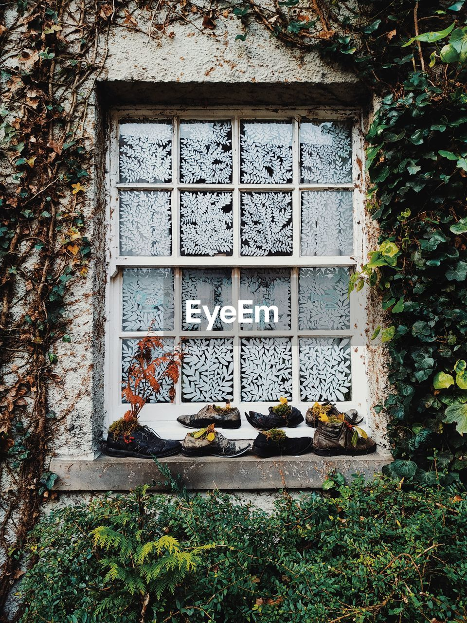 window, architecture, built structure, day, no people, building, building exterior, food and drink, plant, food, house, outdoors, nature, wall - building feature, growth, glass - material, wood - material, freshness, tree, old
