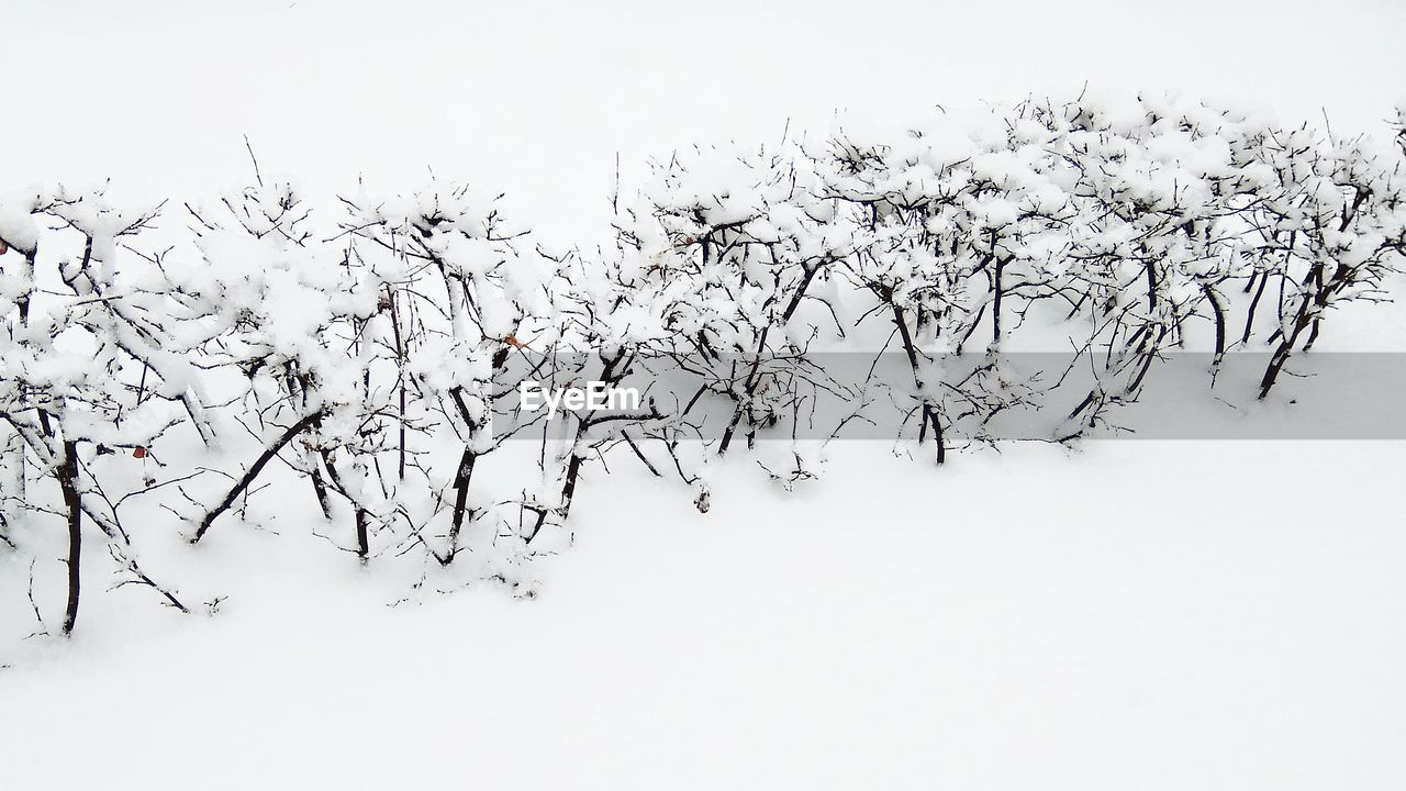 snow, winter, cold temperature, white color, nature, tranquility, tranquil scene, beauty in nature, landscape, no people, bare tree, day, scenics, outdoors, clear sky