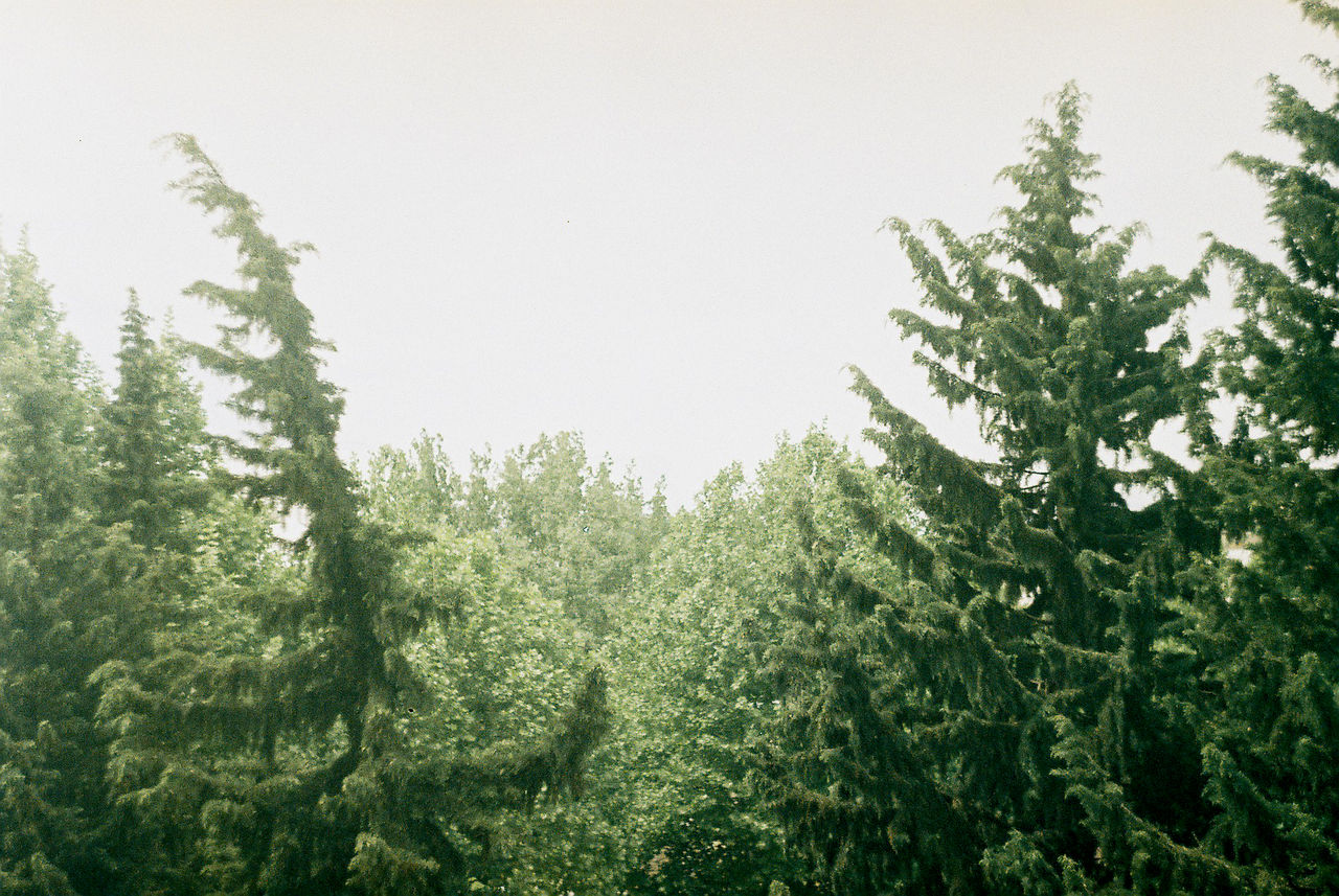 tree, nature, growth, no people, green, tranquility, beauty in nature, green color, day, plant, outdoors