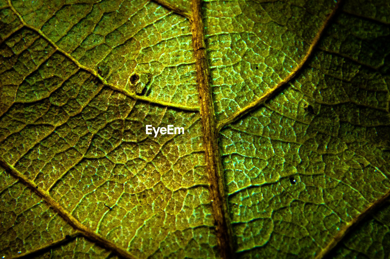 FULL FRAME SHOT OF GREEN LEAVES WITH WATER DROPS