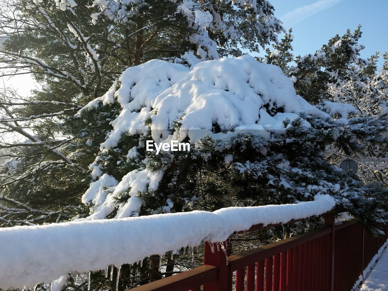 winter, snow, cold temperature, tree, white color, weather, railing, nature, day, no people, outdoors, beauty in nature, sky