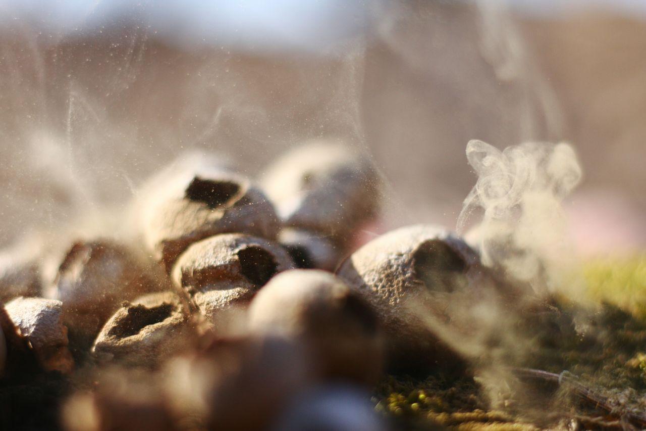 Close-Up Of Wild Mushrooms On Field