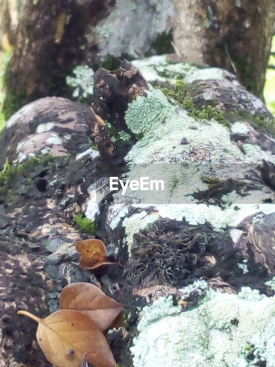 day, rock, nature, leaf, plant, close-up, no people, plant part, rock - object, solid, outdoors, growth, tree, land, beauty in nature, moss, falling, forest, high angle view, focus on foreground, change, leaves, bark, toadstool