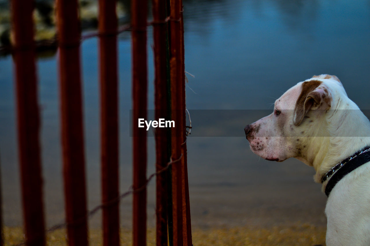 Close-Up Of Dog By Lake Against Sky