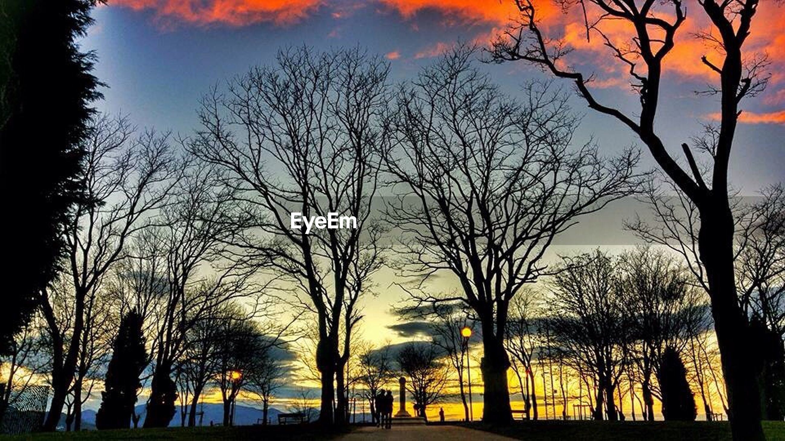 tree, sunset, bare tree, sky, branch, silhouette, tranquility, tree trunk, nature, beauty in nature, transportation, scenics, tranquil scene, treelined, cloud - sky, orange color, road, the way forward, growth, outdoors