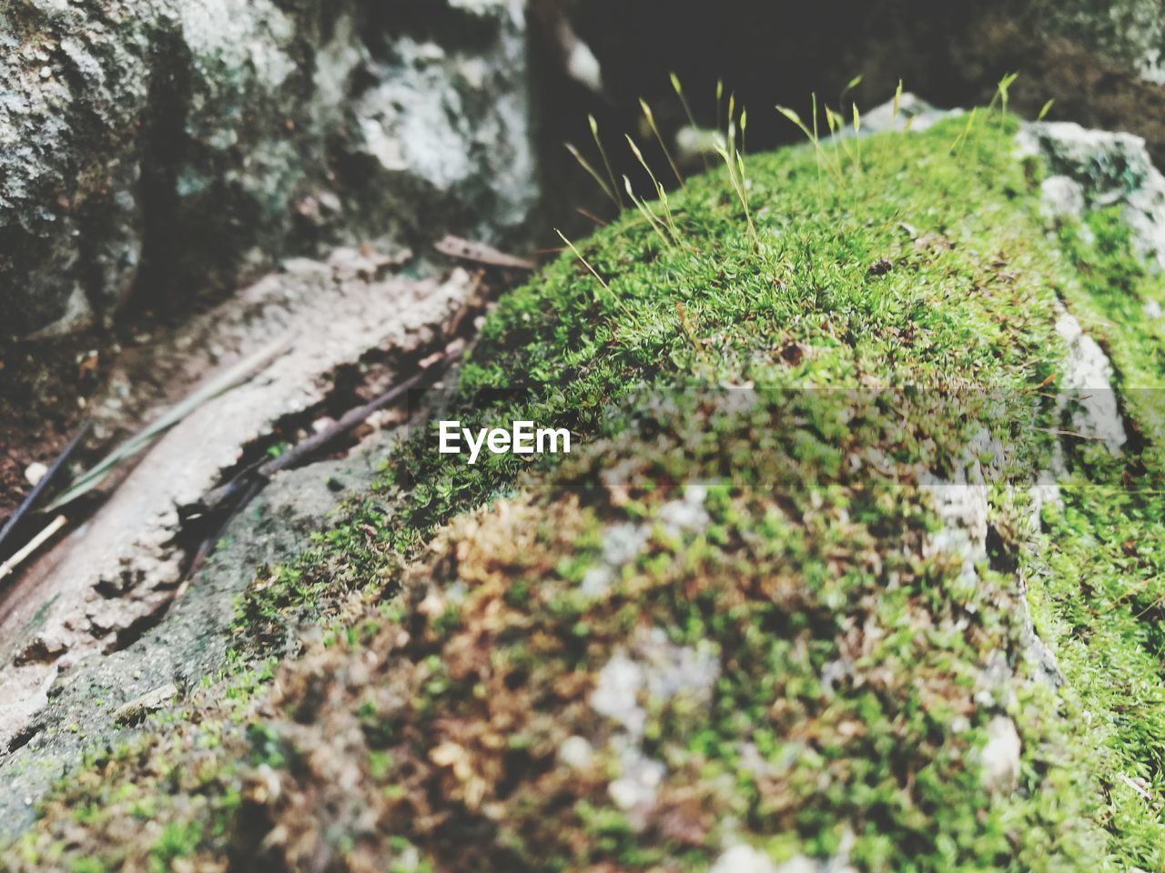 nature, green color, selective focus, growth, no people, moss, outdoors, close-up, day, plant, rock - object, beauty in nature