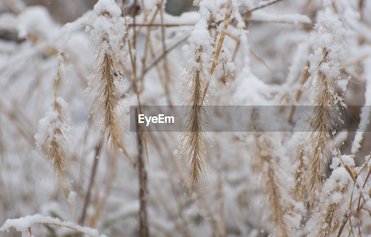 close-up, no people, selective focus, winter, backgrounds, focus on foreground, snow, full frame, nature, cold temperature, day, rope, plant, white color, crop, pattern, dry, outdoors, brown
