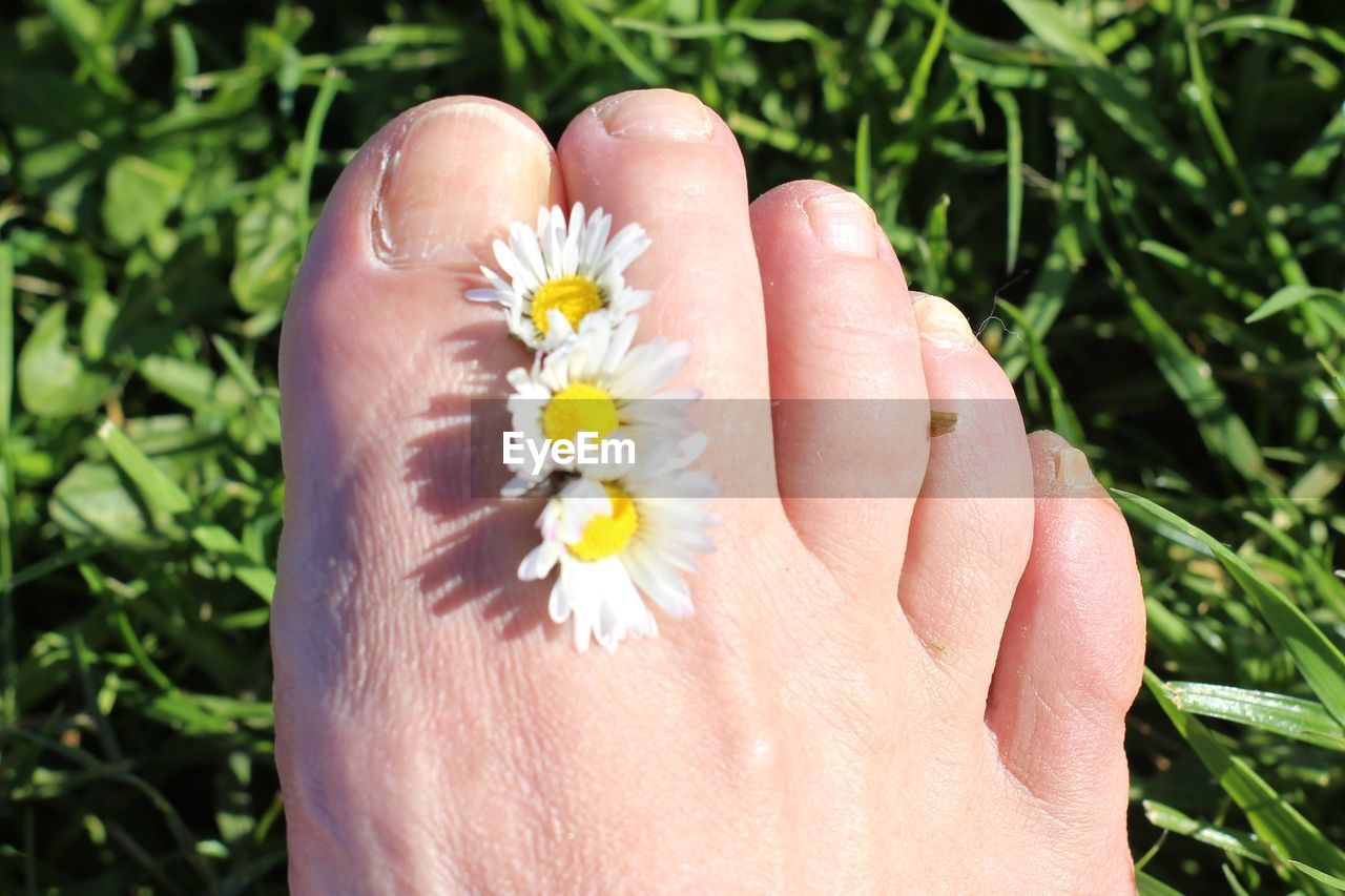 human body part, plant, flower, flowering plant, body part, real people, one person, human hand, beauty in nature, nature, hand, close-up, freshness, day, fragility, vulnerability, growth, lifestyles, finger, outdoors, flower head, human foot, human limb