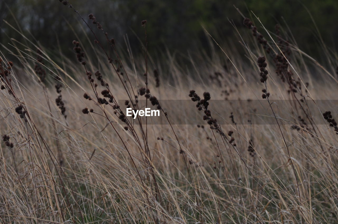 nature, field, grass, no people, plant, growth, day, outdoors, tranquility, beauty in nature, close-up