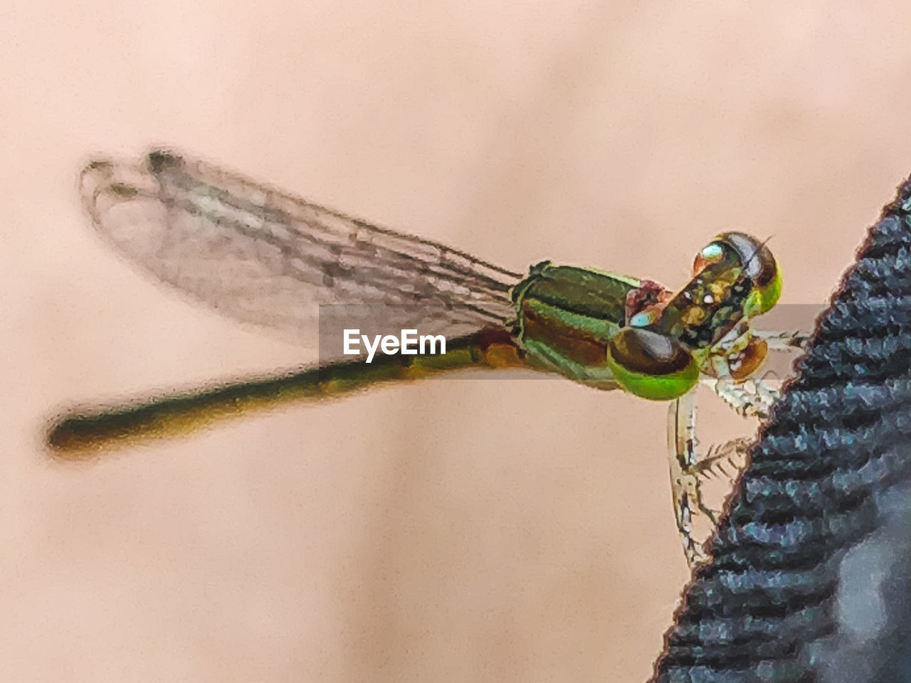 close-up, insect, invertebrate, one animal, animal themes, animals in the wild, animal wildlife, animal, day, animal wing, nature, dragonfly, outdoors, focus on foreground, human body part, one person, plant, green color, selective focus, body part