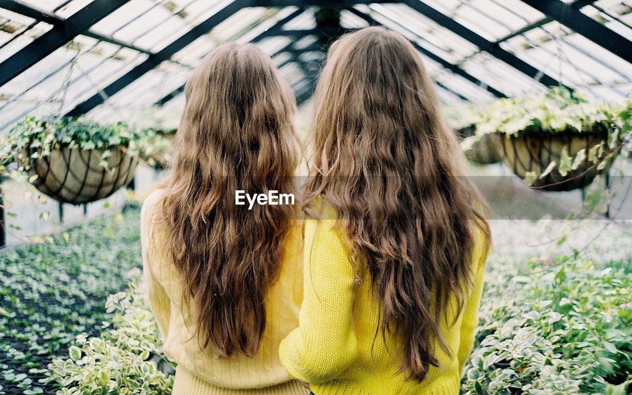Rear View Of Sisters Standing Amidst Plants In Greenhouse