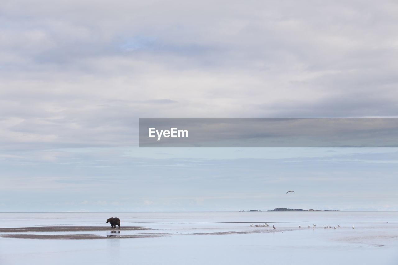 Wide Shot Of Bear On Landscape