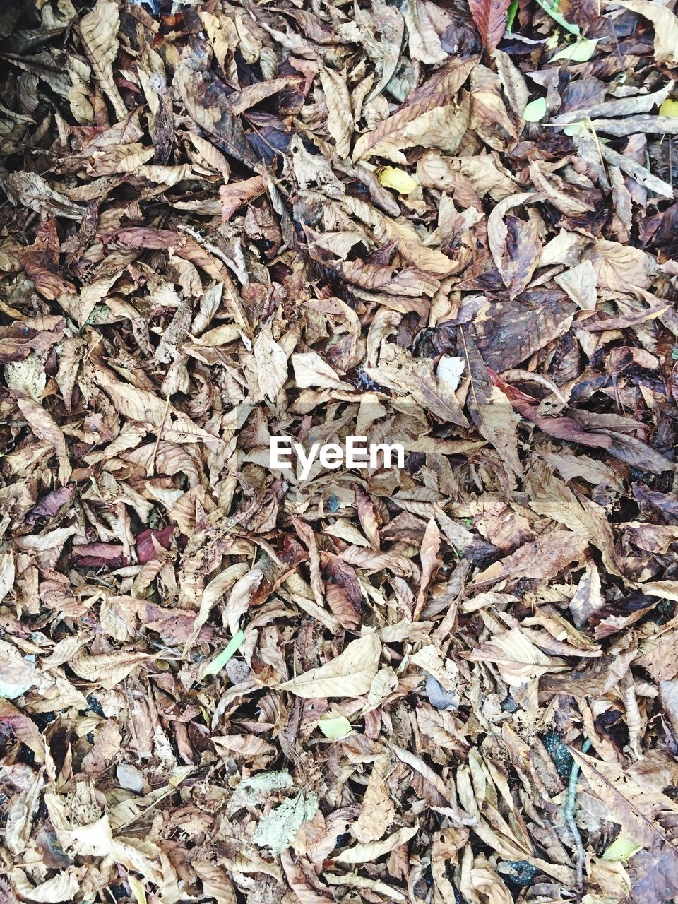 abundance, full frame, dry, shavings, backgrounds, large group of objects, no people, leaf, day, nature, outdoors, close-up