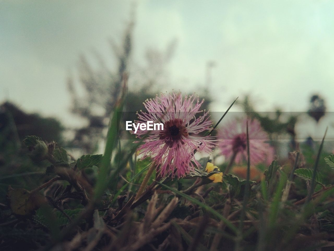 flower, growth, nature, plant, fragility, field, freshness, uncultivated, flower head, beauty in nature, blooming, no people, outdoors, close-up, day, sky