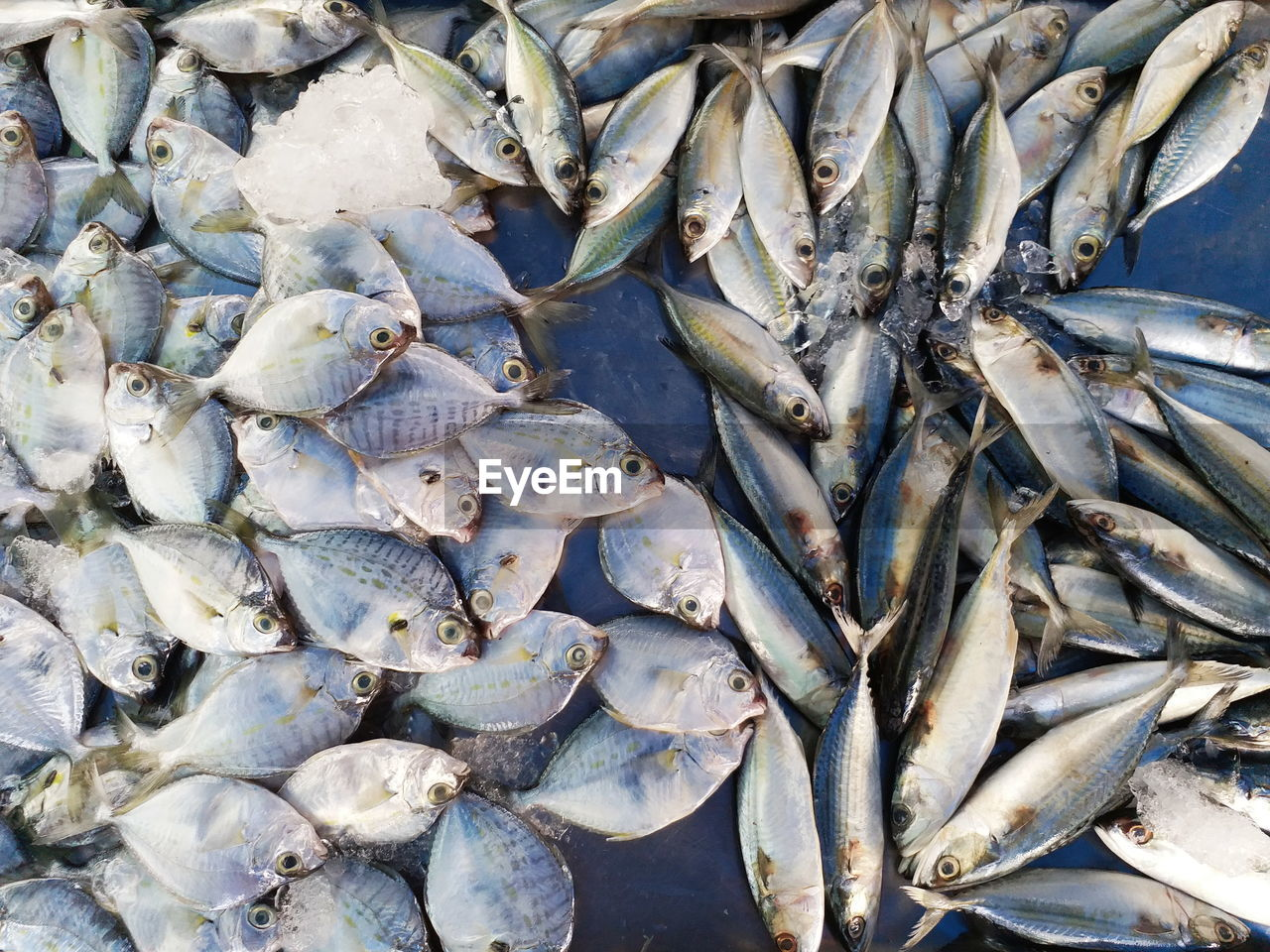 fish, seafood, vertebrate, full frame, freshness, animal, large group of objects, food and drink, no people, food, retail, abundance, for sale, day, market, backgrounds, high angle view, raw food, healthy eating, fishing industry, outdoors, fish market, marine