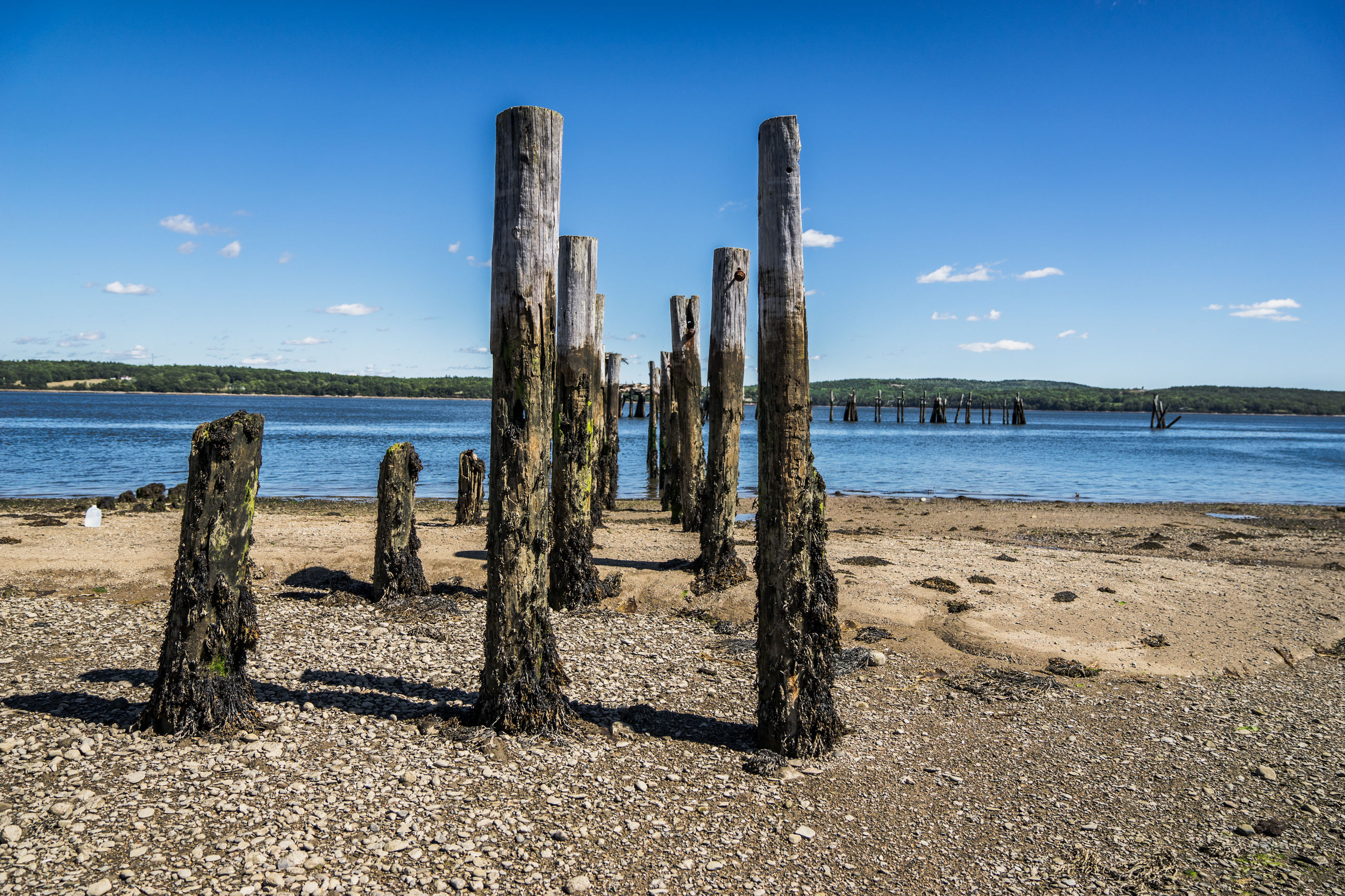 Wooden posts at beach
