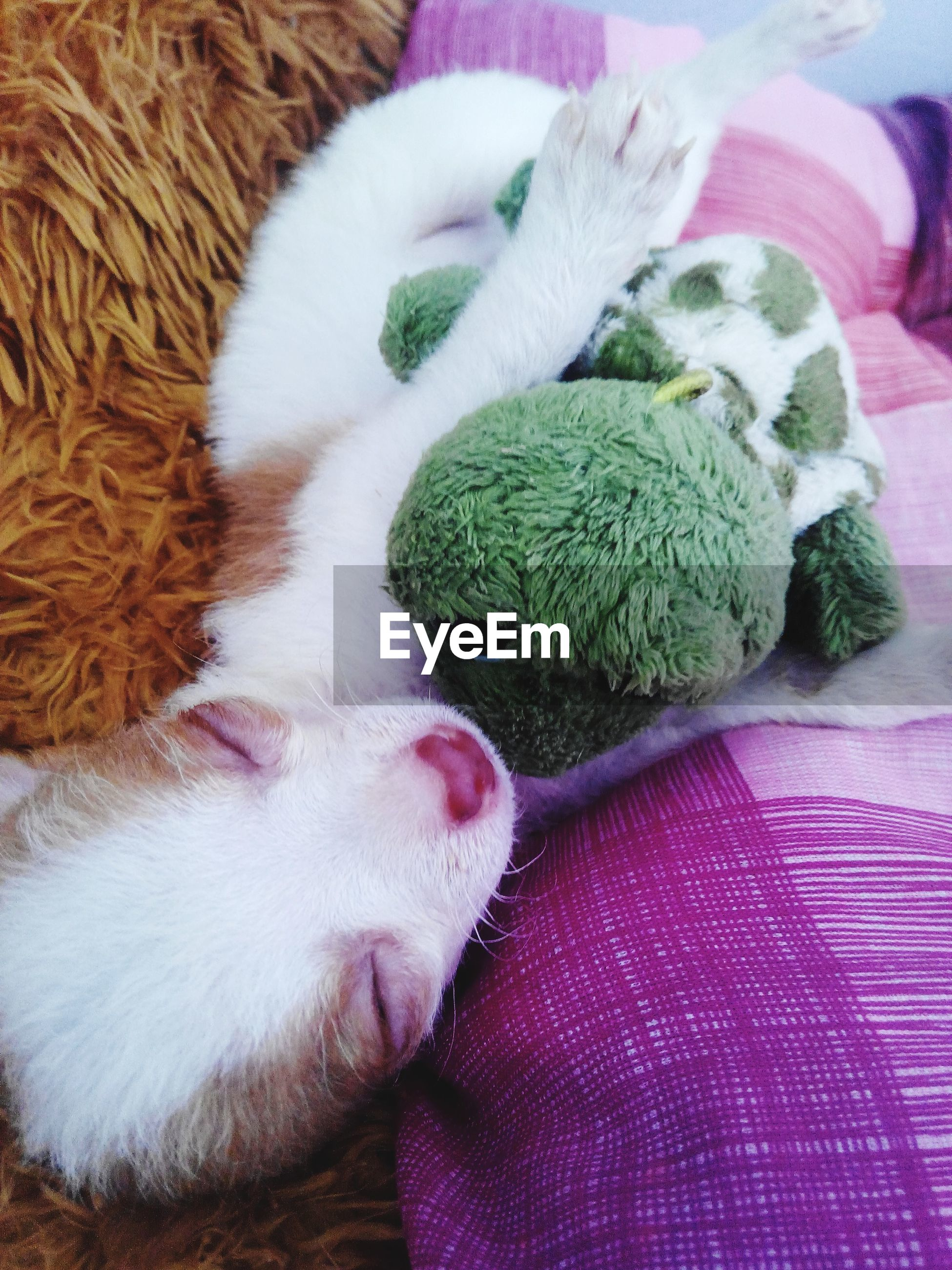 domestic animals, pets, animal themes, indoors, mammal, one animal, domestic cat, relaxation, cat, high angle view, resting, sleeping, close-up, lying down, feline, no people, animal head, bed, white color, whisker