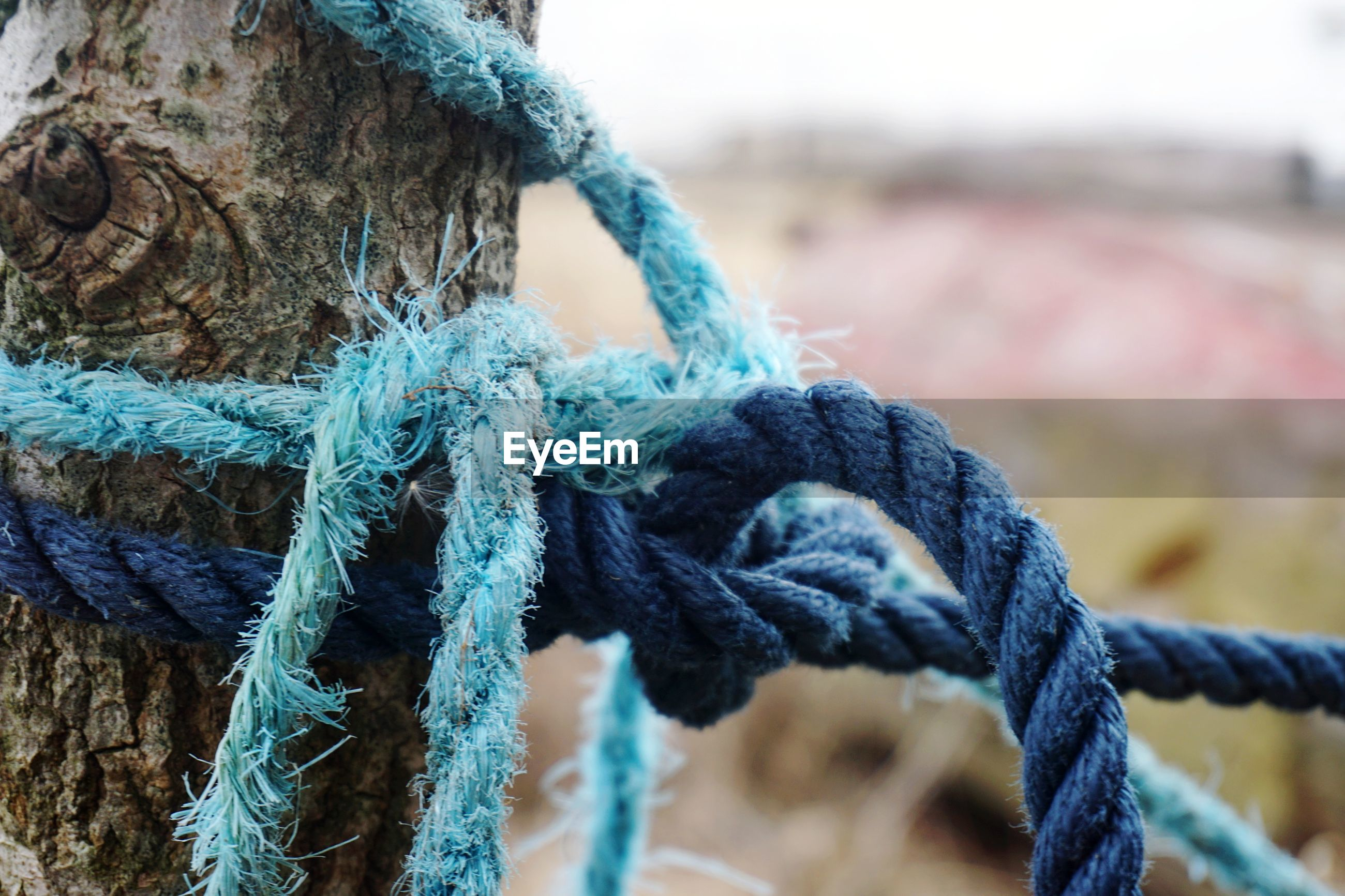 Close-up of rope tied on tree trunk