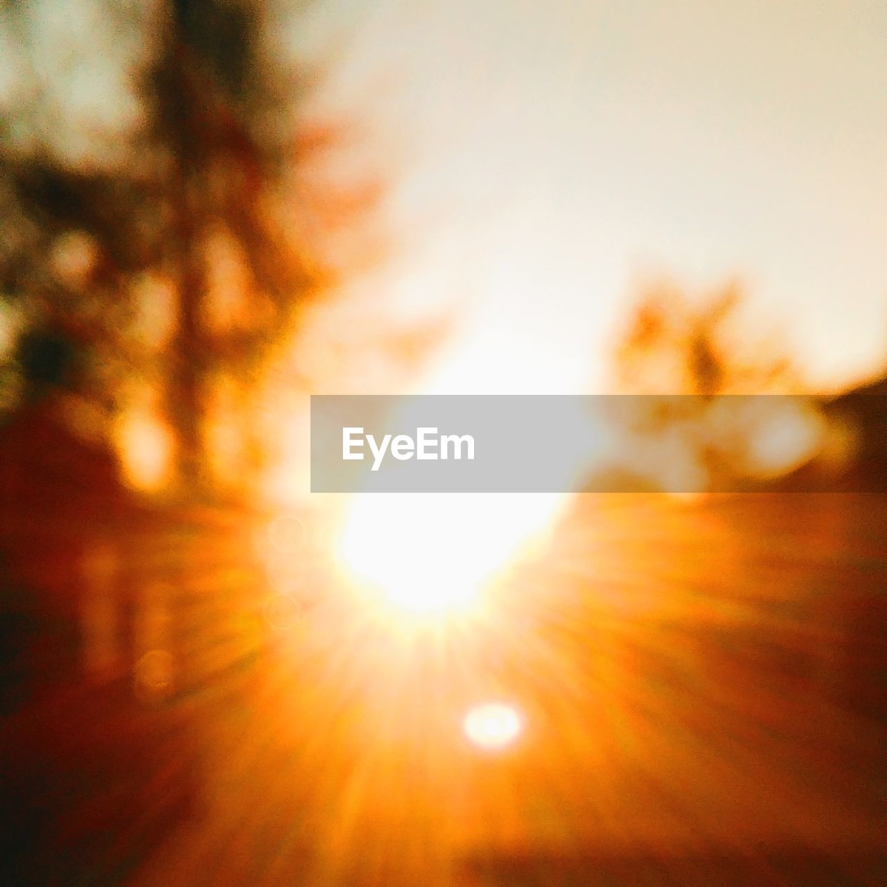 sun, bright, nature, sunlight, lens flare, sunset, beauty in nature, sky, low angle view, no people, outdoors, tree, defocused, close-up, day
