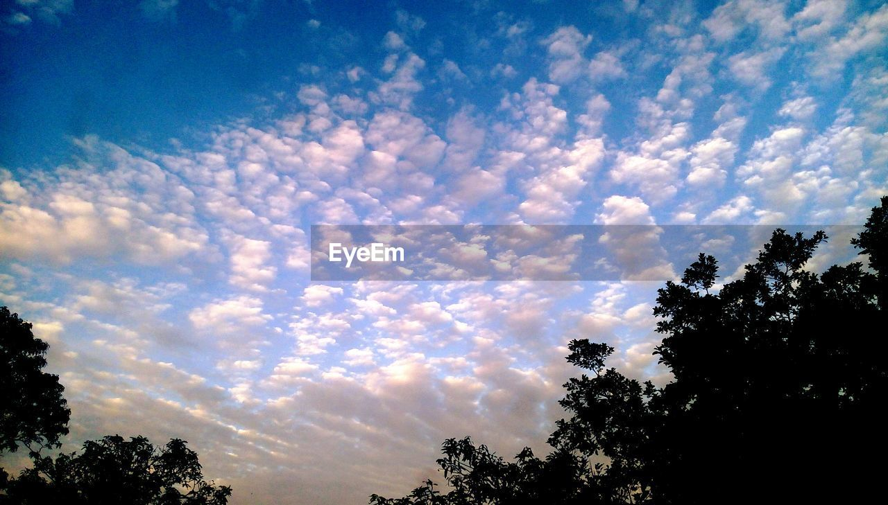 sky, tree, cloud - sky, plant, beauty in nature, silhouette, tranquility, low angle view, nature, scenics - nature, tranquil scene, sunset, no people, growth, outdoors, idyllic, non-urban scene, blue, day, treetop