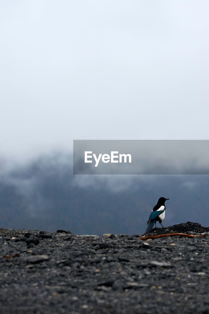 day, sky, one animal, animal themes, nature, animals in the wild, animal wildlife, animal, copy space, no people, vertebrate, bird, fog, outdoors, mountain, land, selective focus, beauty in nature, cloud - sky